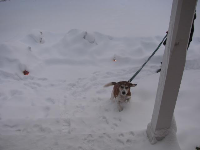 seamus_snow_steps.jpg