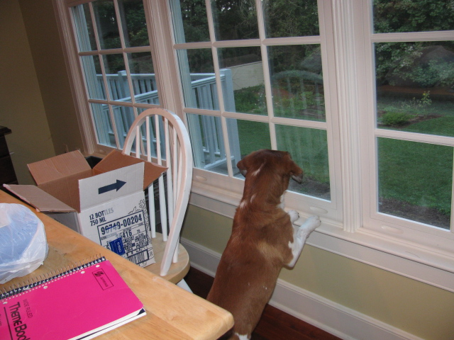 Seamus watching deer.jpg